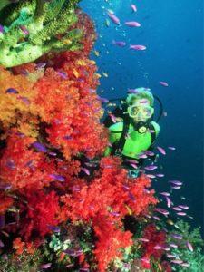 Beqa Lagoon Reef