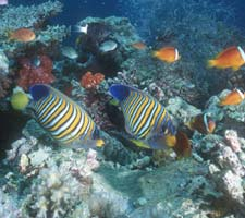 beqa-lagoon-diving11