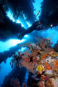 Dumaguete & Puerto Galera Scuba Diving Trips with Scuba Explorers