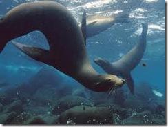 UW Seals