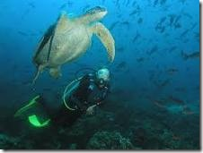uw diver turtle