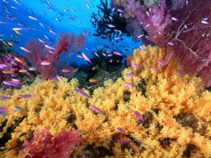 corals & colorful fish